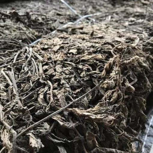 DRIED BLACK JELLY GRASS - GRASS JELLY LEAVES - HoaLienThanh.Com 1